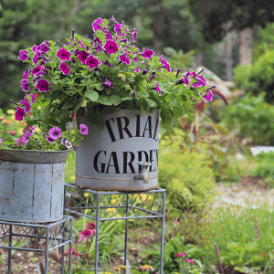 Learn About Gardening