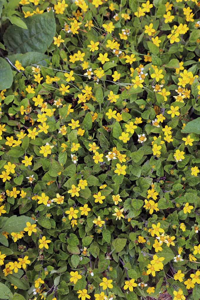 Native Groundcover For Wet Areas