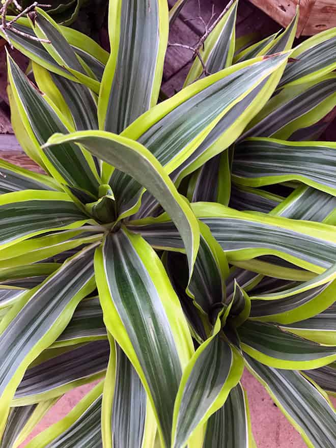 A Plant That Brightens Your Life – Inside and Out