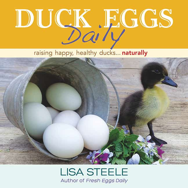 duck-eggs-daily
