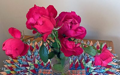 I Love Rosa'Meipeporia' Oso Easy Double Red