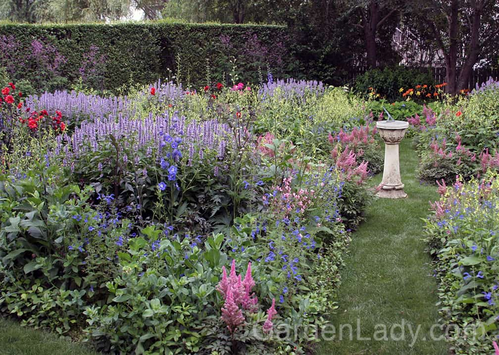 Groups of 'Blue Fortune' are perfect for the center or rear of a perennial garden. Here they are combined with green Nicotiana, blue Delphiniums, pink Astilbe and red Dahlias.