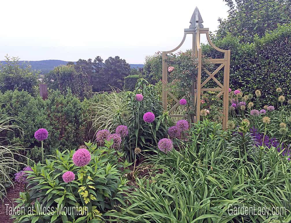 What's amazing about these lovely flowers is that they are equally interesting when they go to seed. And BTW, you too can visit Moss Mountain! Get information here: http://pallensmith.com/the-farm/