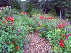 """I have tended to plant Annual Alley in a loose, """"field style"""" rather than short in the front, medium next and tall in the center or back."""