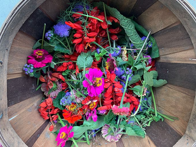 Deadheading and Pinching The First Flowers on Annuals