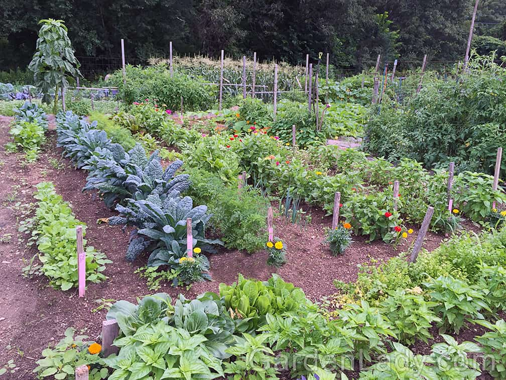 Veggie gardens don't have to be planted in long, straight rows.