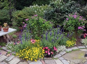 Every year I plant a different combination of annuals around the edge of this garden. I usually go for bright, bold colors in this bed, and in 2014 I used Bidens Goldilocks Rocks with coral Sunpatiens, blue Victoria annual Salvia, and Frosty Knight Lobularia. You KNOW this was a hit because this garden made the cover of my new book, The Cocktail Hour Garden!