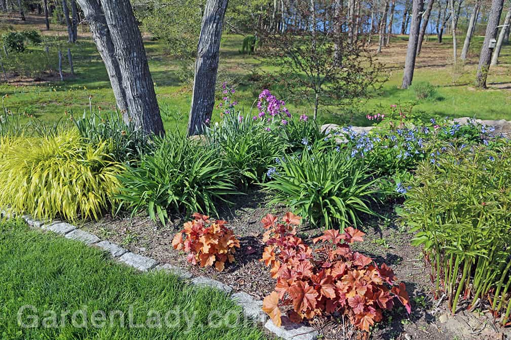 Virginia bluebells will fill in bare areas before the perennials are very high. Here they are beginning to scramble among yellow hakon grass, daylilies, peony foliage and the coral-leaved Heuchera.