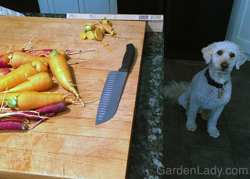 When I was slicing I discovered that my neighbor's dog, Baxter, thinks that carrots are more delicious than steak!