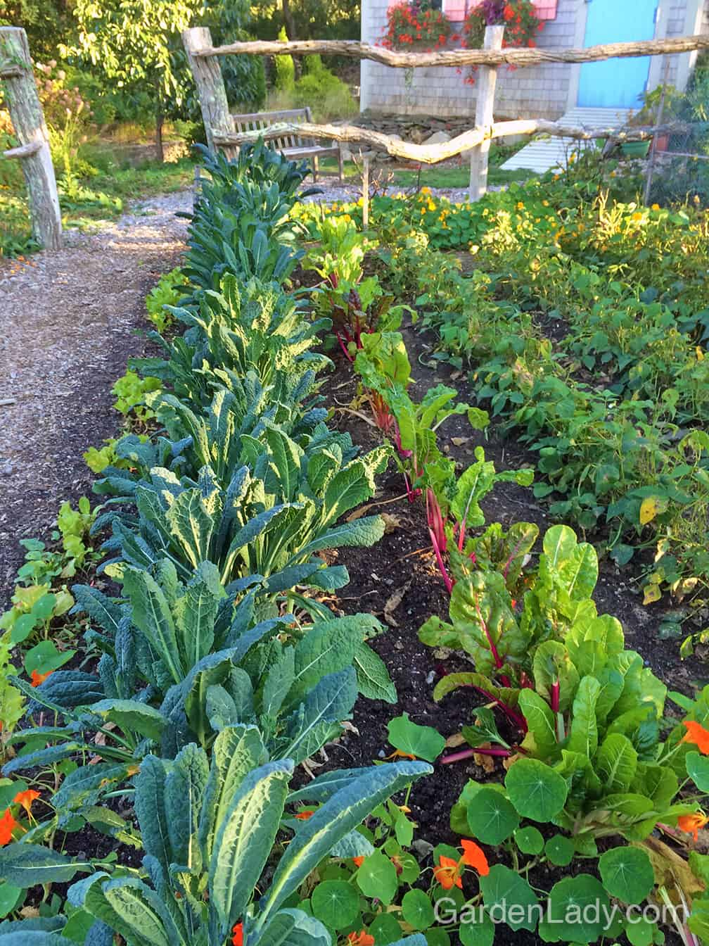 Don't settle for photos of lovely veggie gardens...create one for yourself! You will not only get the satisfaction of posting shots of your garden on Instagram, you'll get to eat what you've grown! #BestTastingFoodOnEarth
