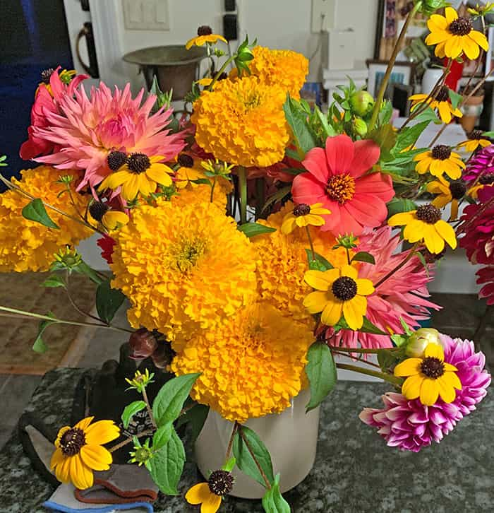 Elevate Marigolds – An Annual Plant That Makes Me Happy