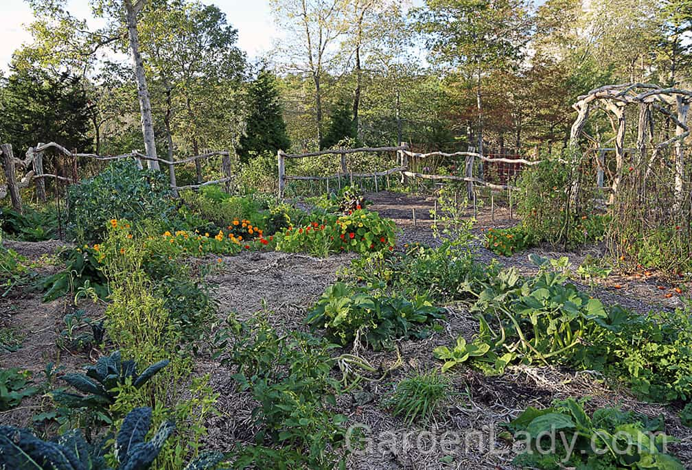 """Here is our front-yard vegetable garden on October 26th. Not as full and lush as it is in July, for sure. But it would be foolish for us to write these veggies off this early. In truth, when I went into this garden tonight and asked """"What's for dinner?"""" I had several choices."""