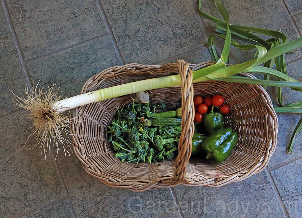 Garden Vegetables in Late Fall