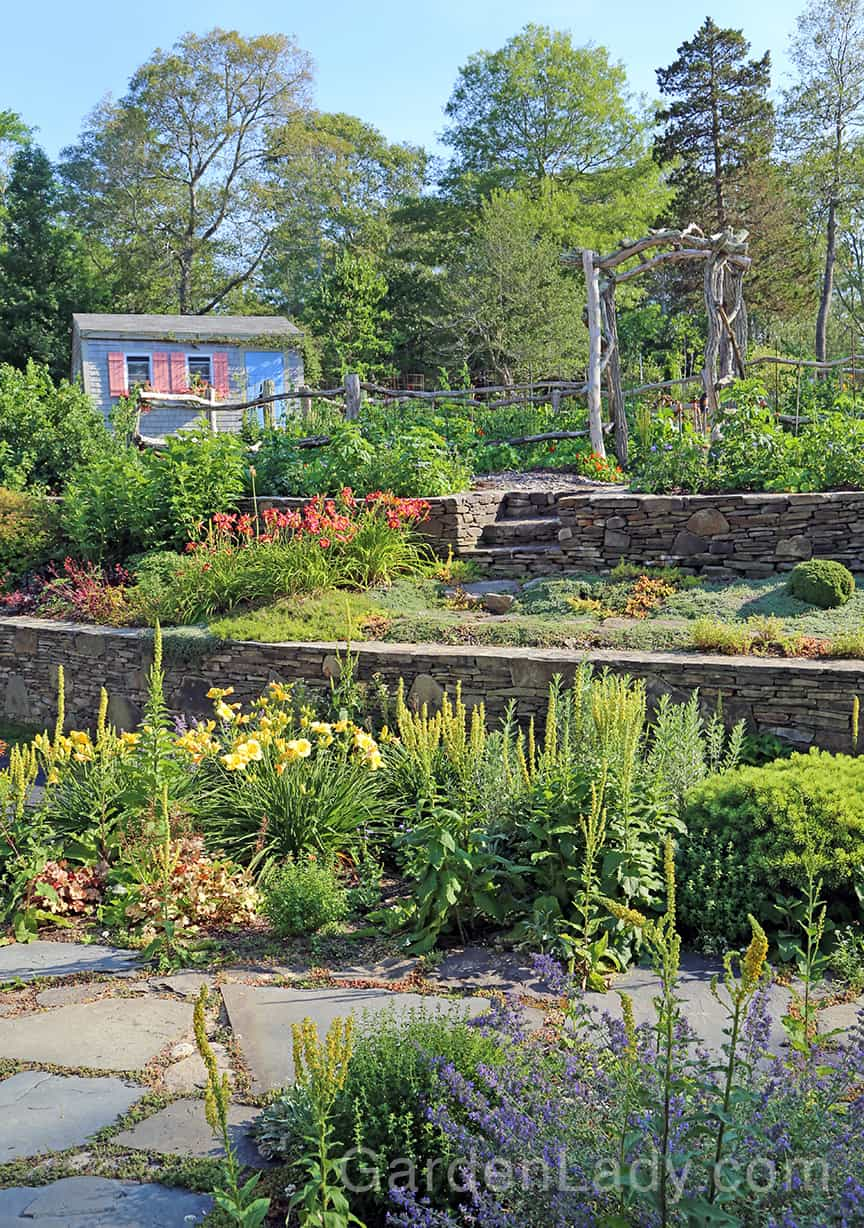 The veggie garden is beginning to produce, the berries are ripe and the test gardens are flowering.