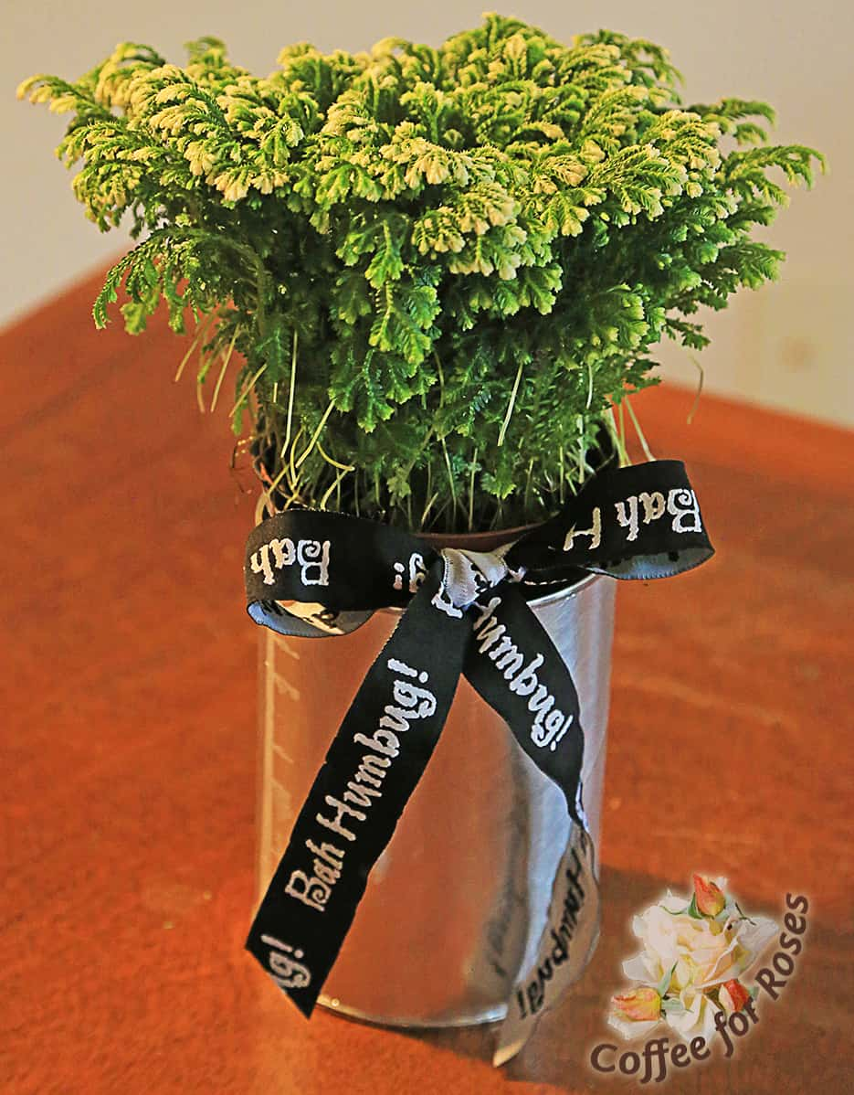 A tin can with a Bah Humbug ribbon makes a funny gift for a holiday curmudgeon, or a centerpiece that will make your guests do a double-take!