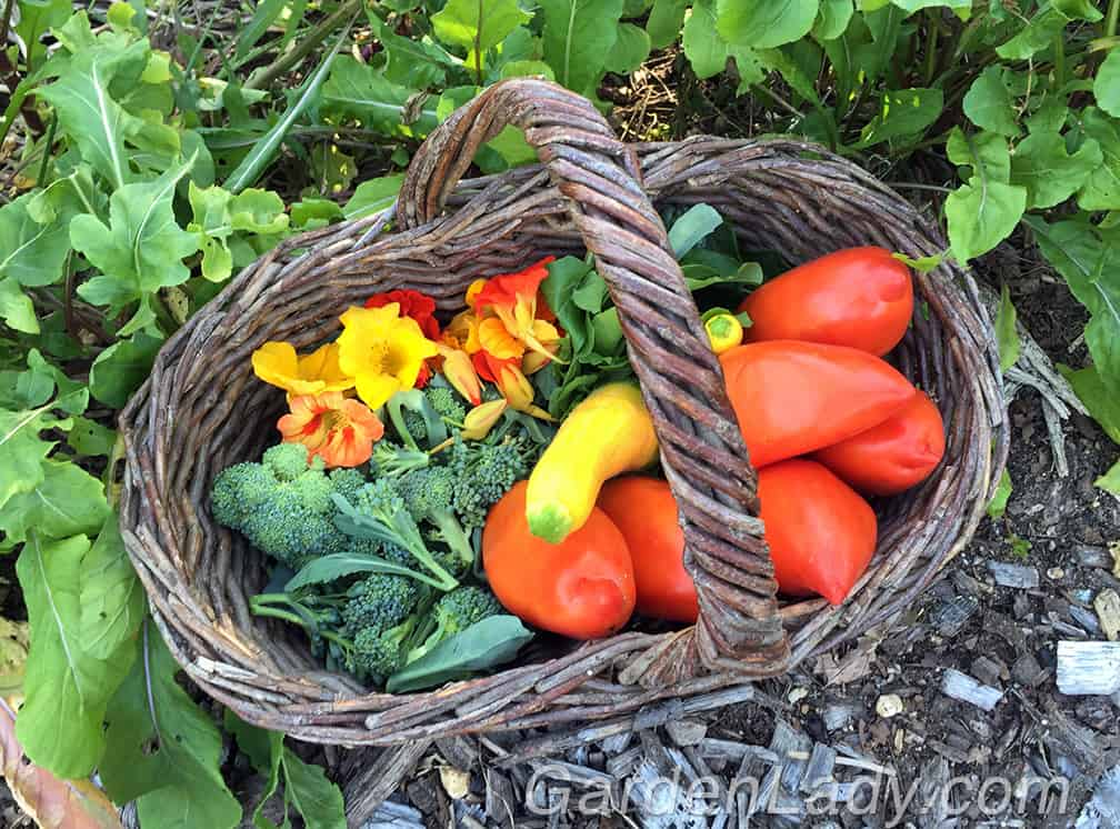 Here is what filled my garden basket yesterday. Broccoli shoots, arugula, two Zephyr summer squash, nasturtium flowers and some Howard German tomatoes.