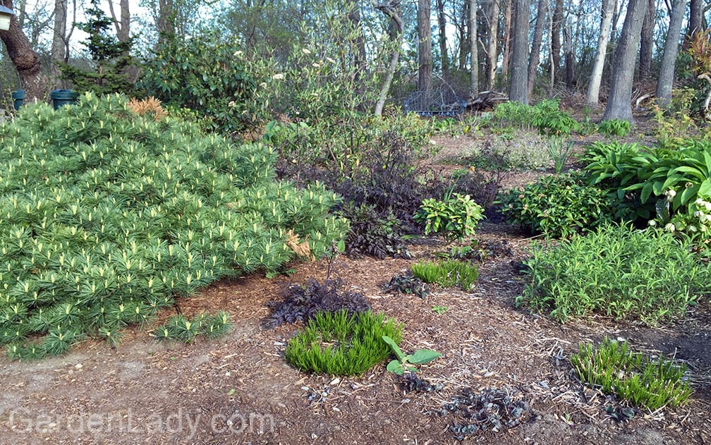 """This area of my landscape is in shade until about 2 PM. So although I call this """"the shade garden"""" it does get direct sun from about 2 to 6."""