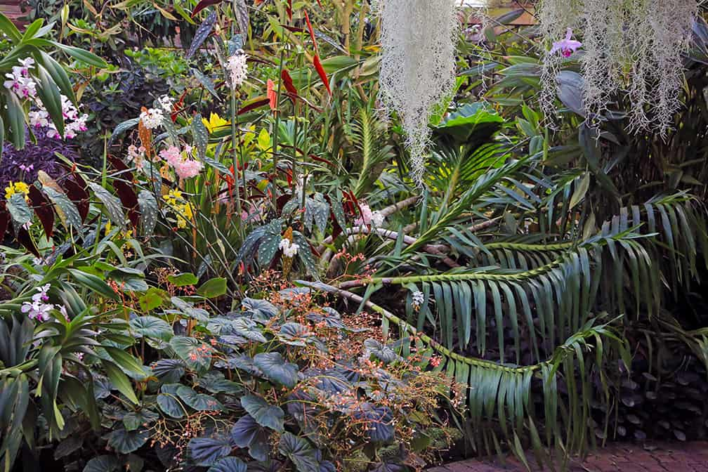 This shot taken at the Atlanta Botanical Garden captures the wonder and richness of the plant world. And it's just a small taste of the diversity!