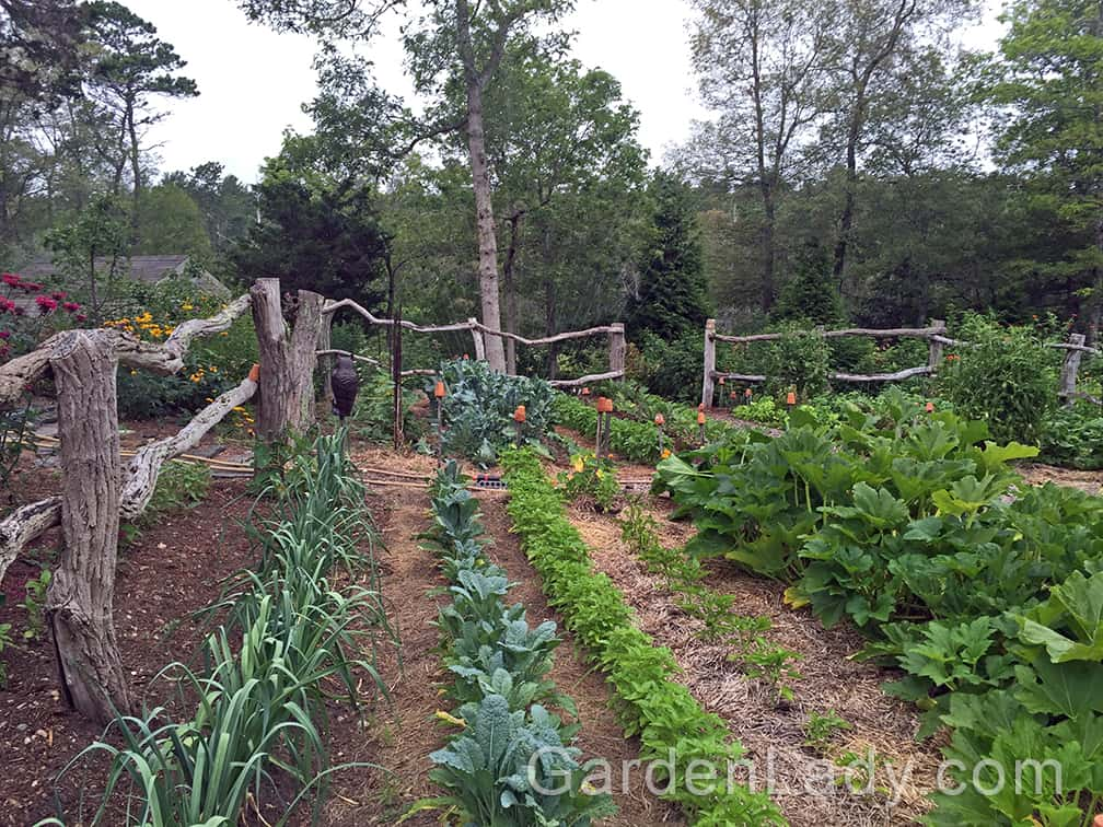 A Beautiful Veggie Garden? You Can Grow That!