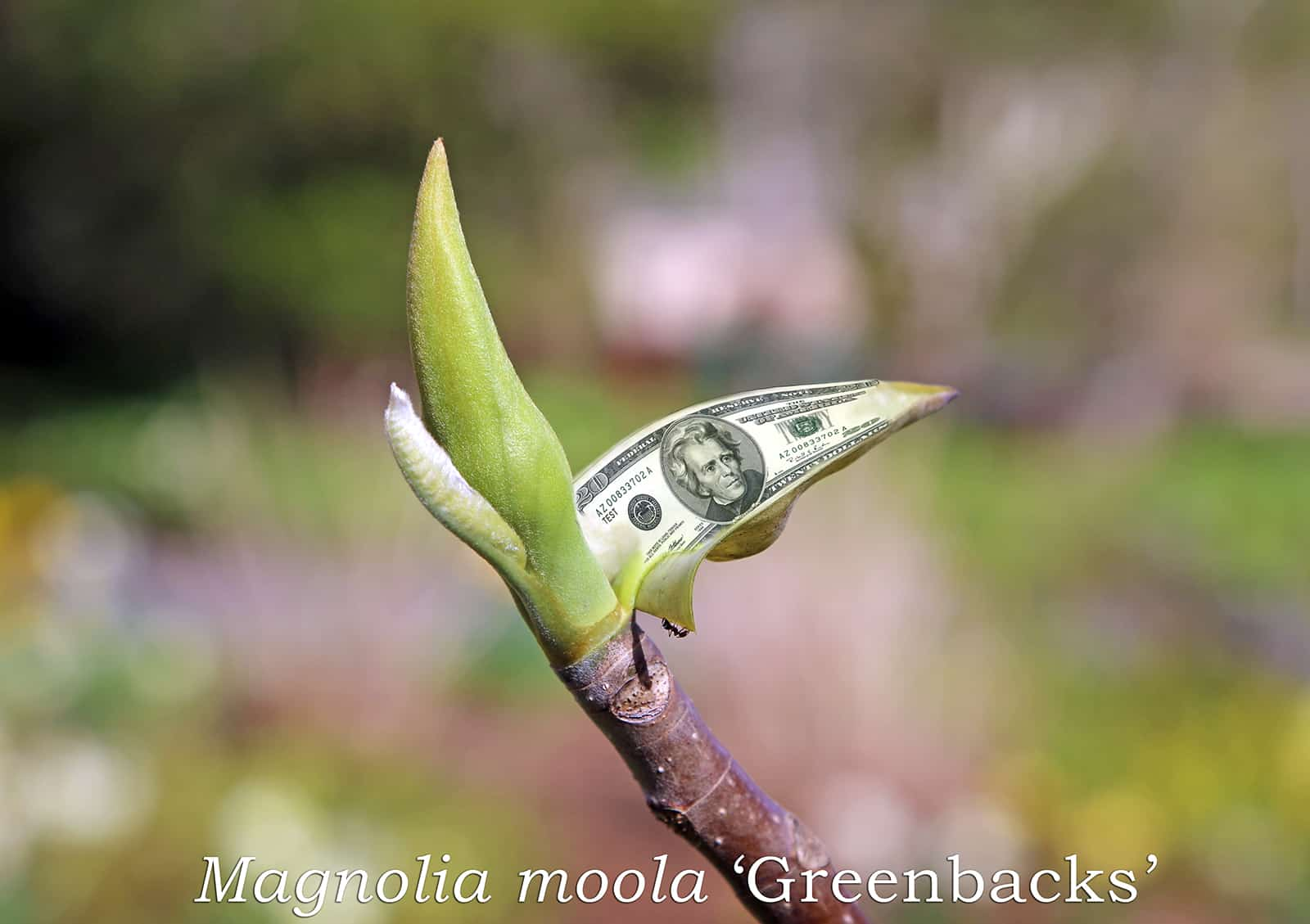 Horticultural Hotline: Money DOES Grow on Trees!