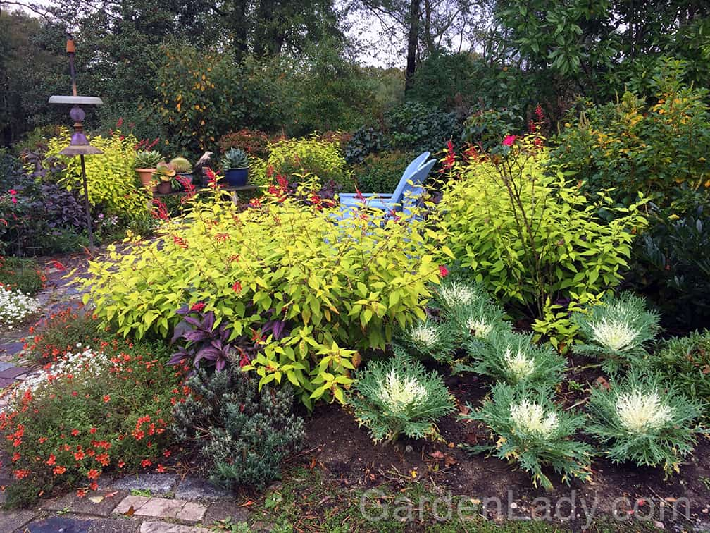 Yes, the plants that embrace your autumnal celebrations are colorful and exciting. They add their fragrance, texture and color to each hour as fall turns into early winter.