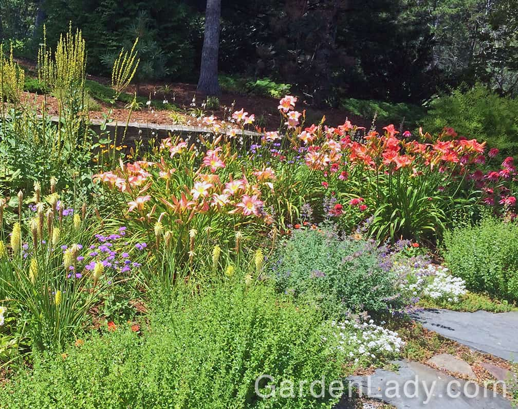You can see the clear, deep coral flowers of 'South Seas' on the far right of this photo. It's a daylily that blends well with other daylilies, not to mention a host of other perennials and annuals.