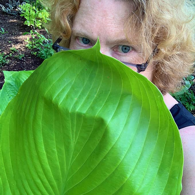 I Love 'Sum and Substance' Hosta