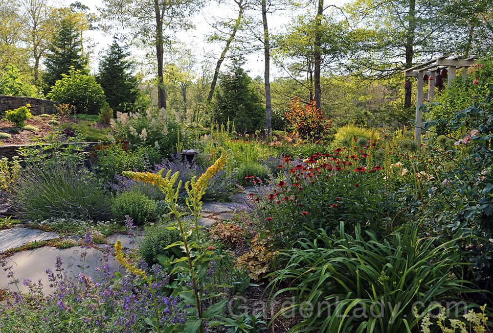 See the entry garden by the front door - the Echinacea and daylilies are coming into bloom.