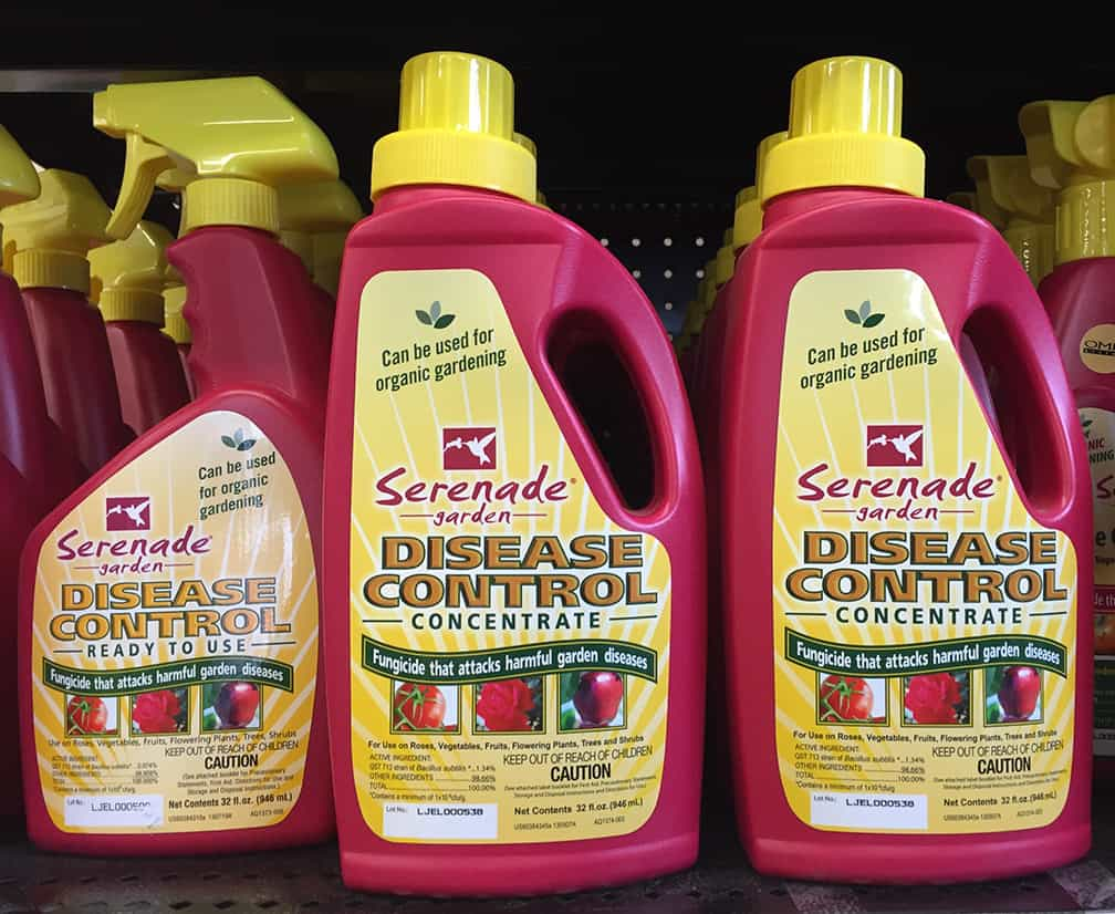 The main fungal problems I have in the veggie garden are leaf spot, powdery mildew and early blight. I use an organic fungicide for all of these.
